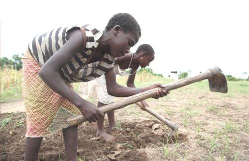 afrika_landwirtschaft