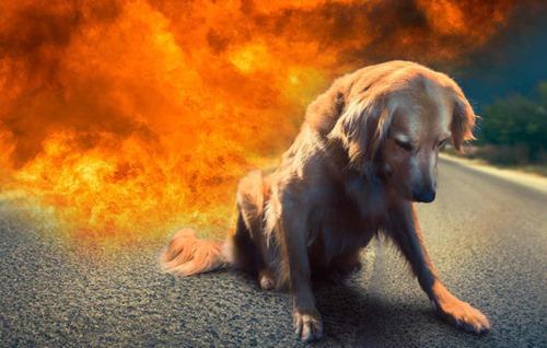 hund_verbrannt