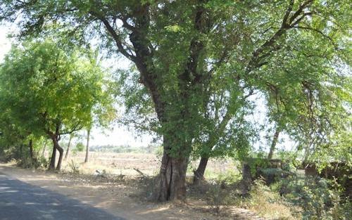 Tree_hollow_(5)