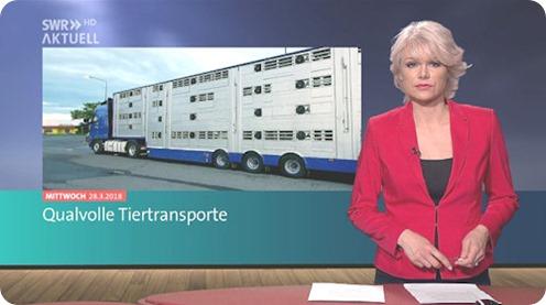 qualvolle_tiertransporte