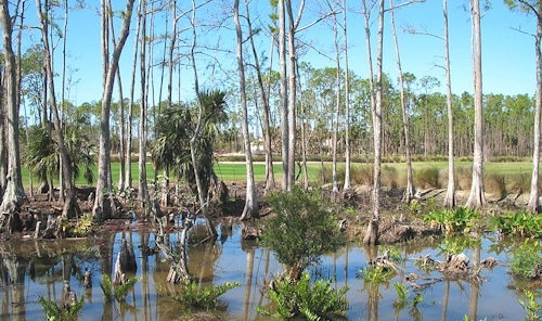 Naples_Swamps_01