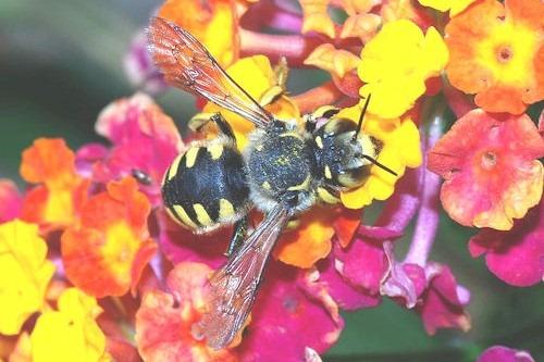 Bee_September_2007-13