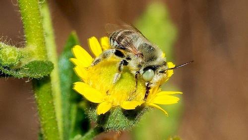 Bee_September_2007
