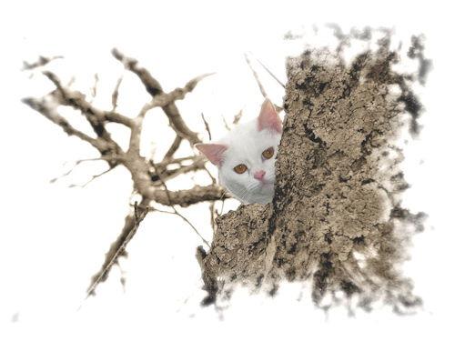 Gato_Cat