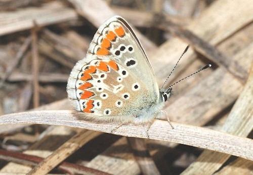 Butterfly_November_2007-9