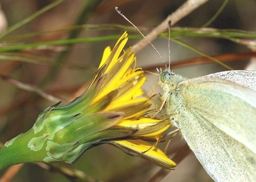 Butterfly_November