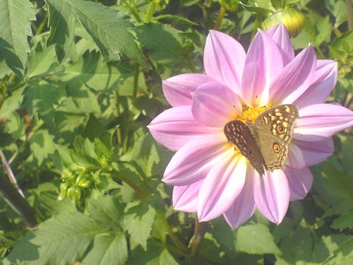 Rajeevmass_flower