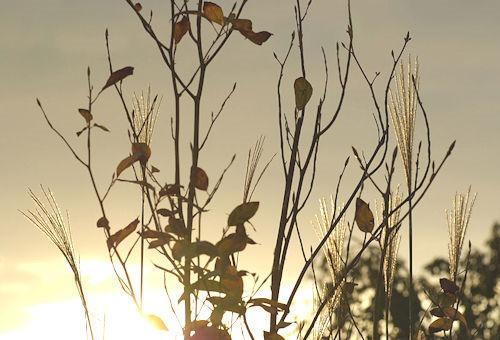 Sunset_in_Autumn