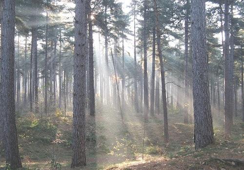 woods_of_Kasterlee,_Belgium