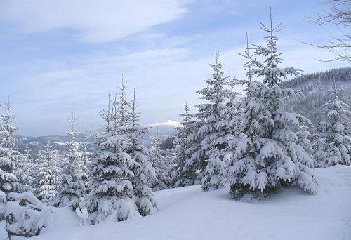 winter_2008
