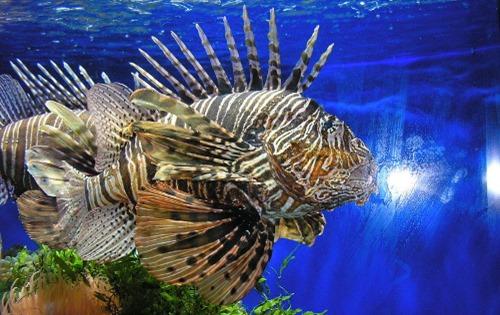 Fish_in_Oceanographic_Museum_Monaco