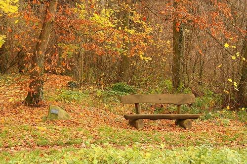 forest,_heidelberg