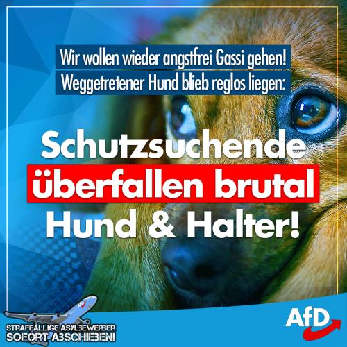 schutzsuchende_hund