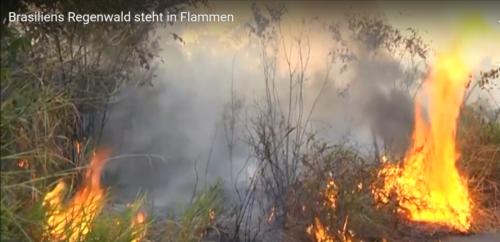regenwald_flammen