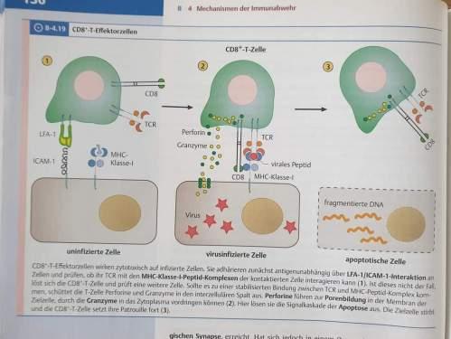 koerperfremde-proteine