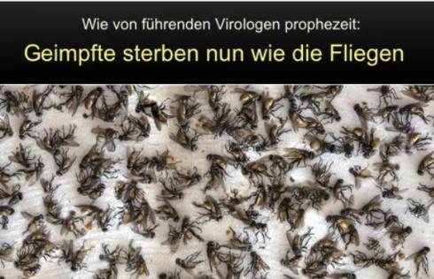geimpfte-fliegen